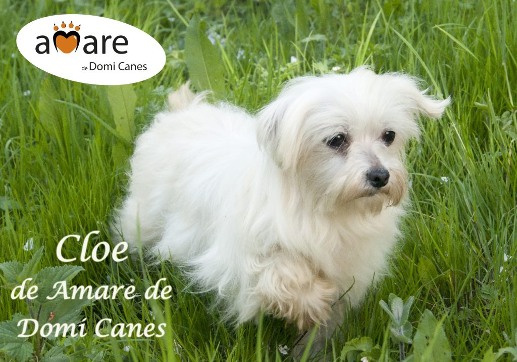 Cloe de Amare de Domi Canes