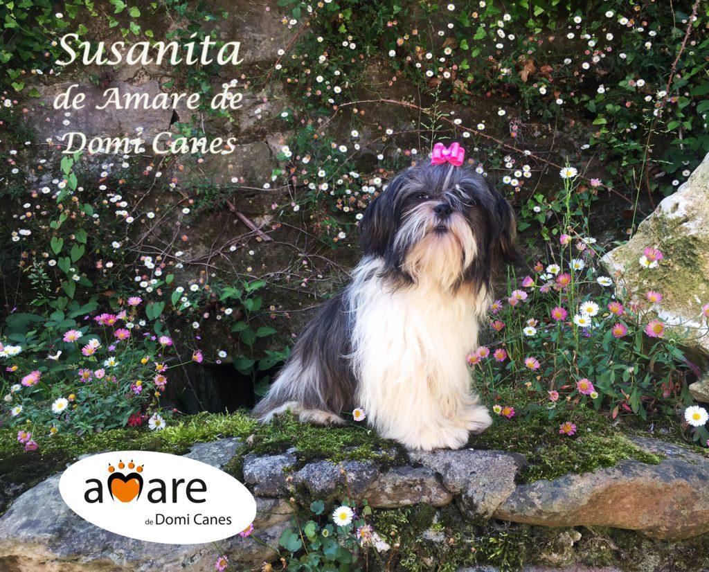 Susanita de Amare de Domi Canes